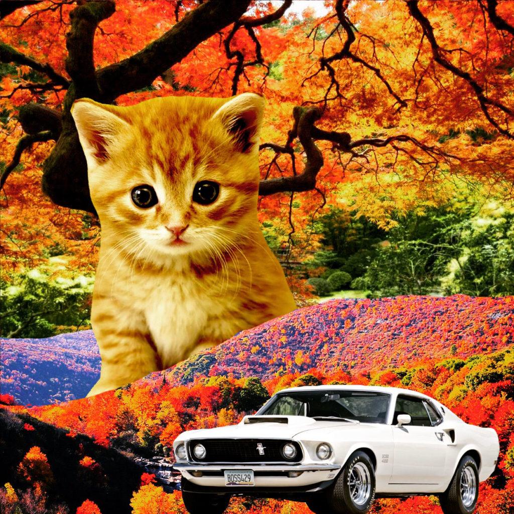 Gigantic cat with mustang car