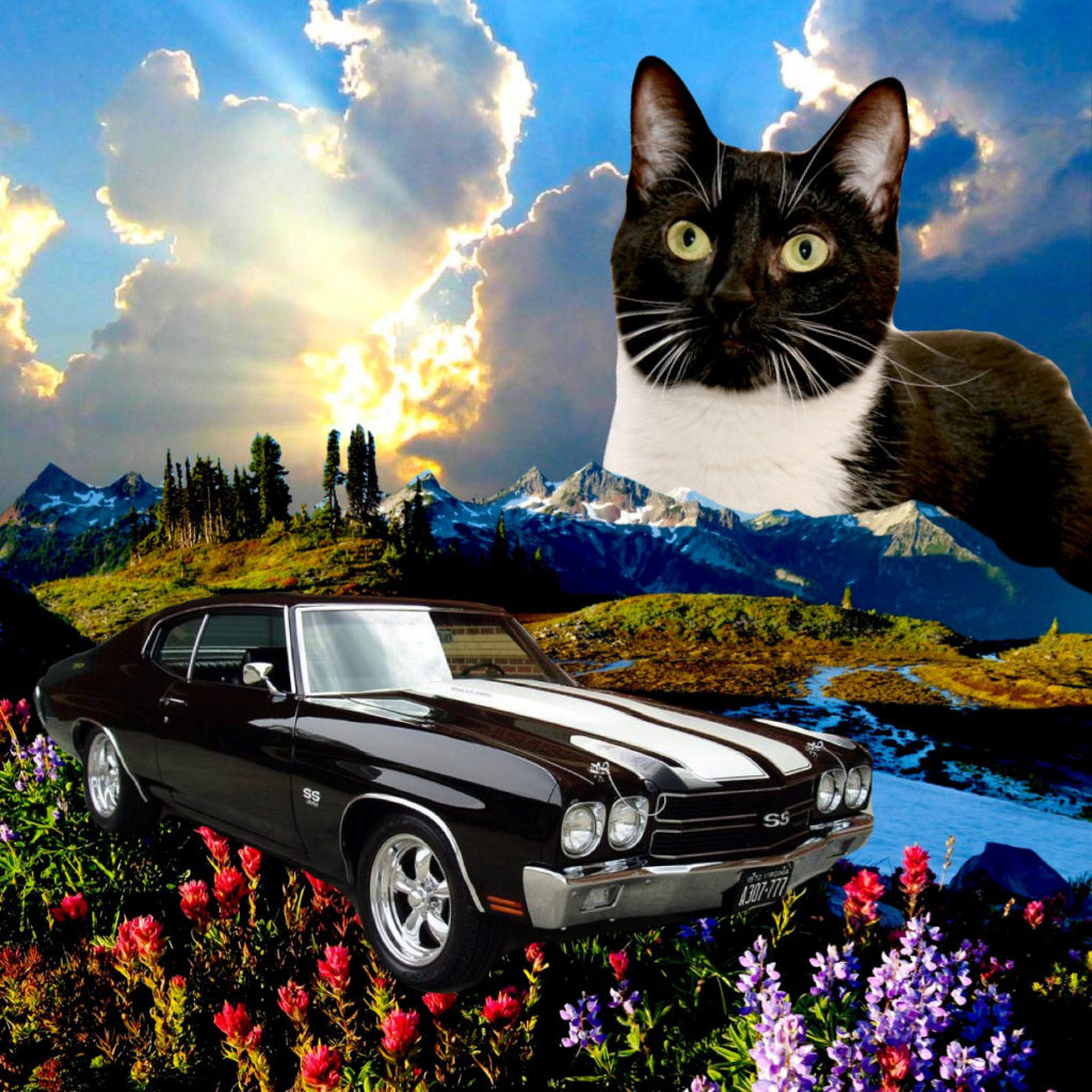 cat and car in meadow